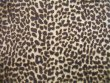 Minky Animal Print Fur Fabric - Baby Cheetah