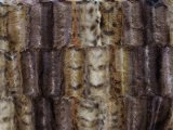 Minky Animal Print Fur - Exotic, faux fur fabric